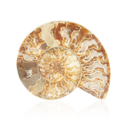 Tucson Collection Set of 2 - Extra Cut Ammonite 458 Gms.