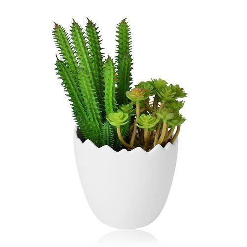 (Option 2) Tempe Cactus Plant in Egg Shape Ceramic Pot (Size 20x12 Cm)