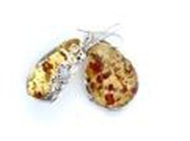 Natural Baltic Amber Hook Earrings in Sterling Silver, Silver wt 9.43 Gms