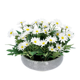 Daisy Flowers in Ceramic Vase - White