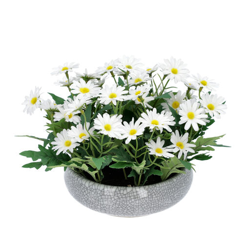 Daisy Flowers in Ceramic Vase - White