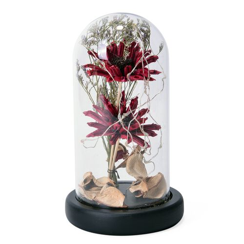 Red Gerbera Daisy Flowers and Fallen Petals Preserved in Glass Dome with LED Lights (Size 20X10 Cm)