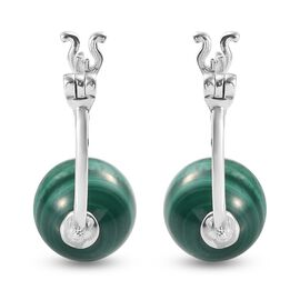 Malachite Hoop Earrings (with Clasp) in Sterling Silver 21.83 Ct