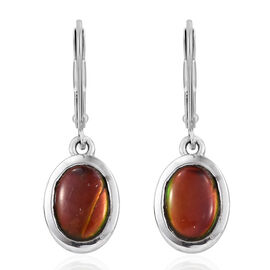 AA Canadian Ammolite (Ovl) Earrings (with Lever Back) in Platinum Overlay Sterling Silver