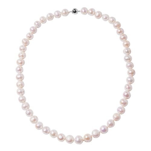 3 Piece Set - Big Size Freshwater White Pearl (9-11mm) Necklace (Size 20), Bracelet (Size 6.50) and Stud Earrings in Rhodium Overlay Sterling Silver