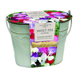 Taylors Metal Bucket Planter - Sweet Pea Mix Seeds